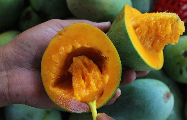 Tidak perlu dikupas. buah mangga alpukat yang unik dari pasuruan.