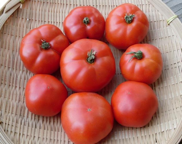 Tomat adalah sumber lycopene, vitamin C, dan vitamin A
